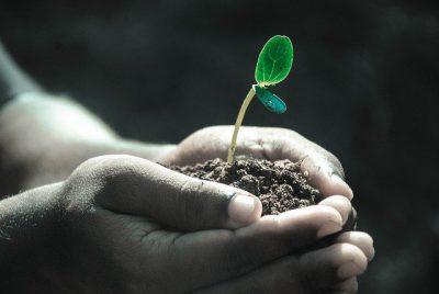 Handels GmbH für Pflanzen und Blumen kaufen